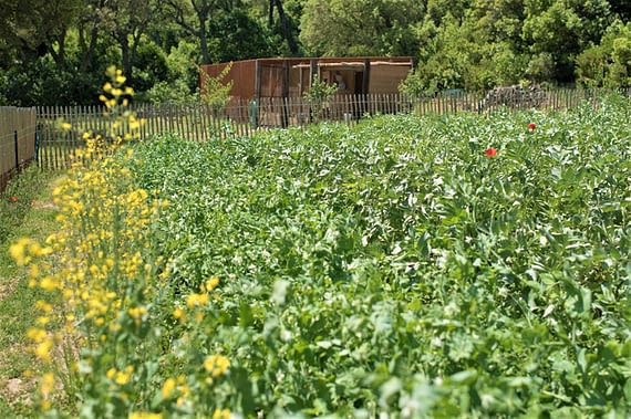 Potager / Vegetable garden