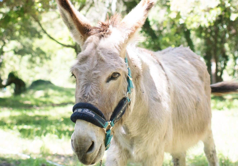 Âne / Donkey