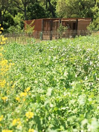 Jardin ou potager / Vegetable garden