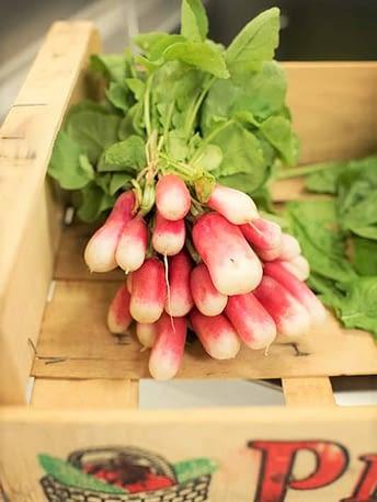 Radis de jardin / Garden radishes
