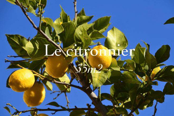 Le citronnier, 35 square meters